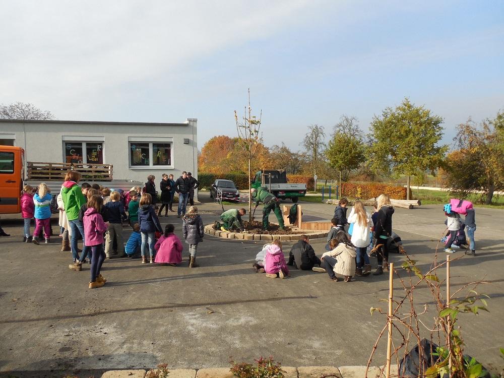 Schulhof-Kastanie (3)