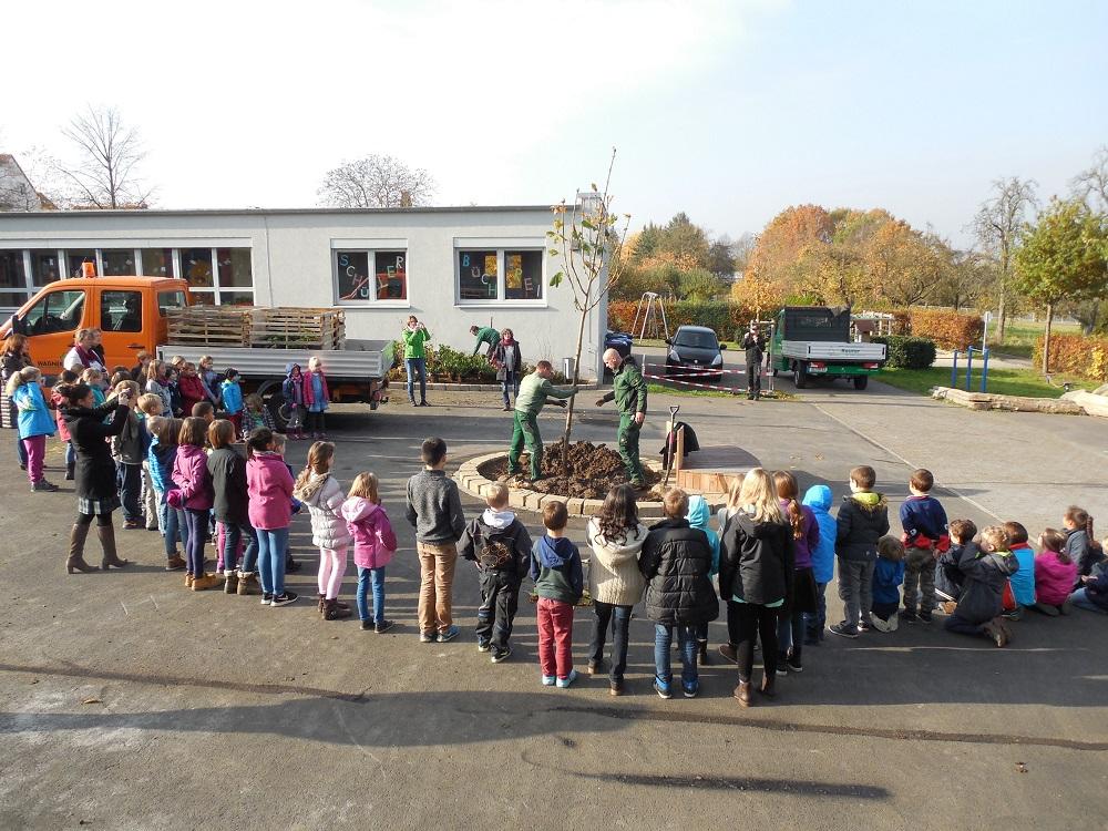 Schulhof-Kastanie (2)